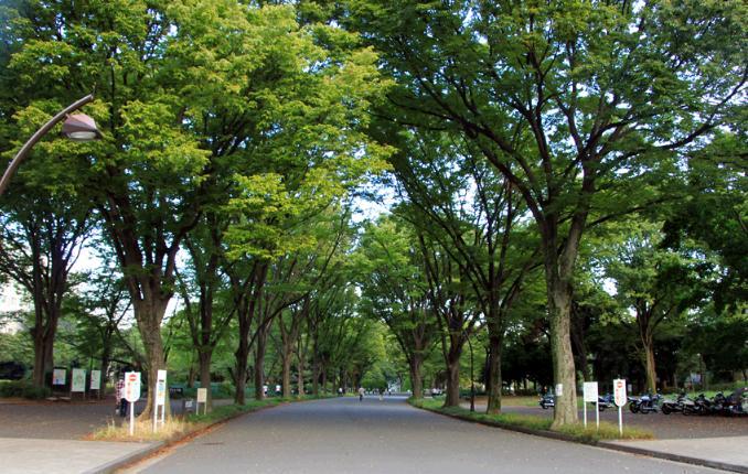 東京 ランニング コース 30km